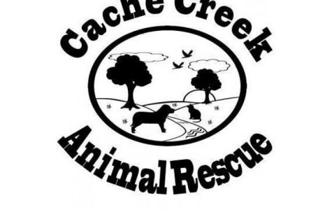 Volunteer opportunity at Cache Creek