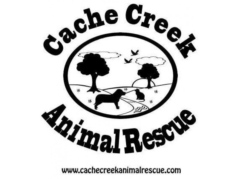 Volunteer+opportunity+at+Cache+Creek